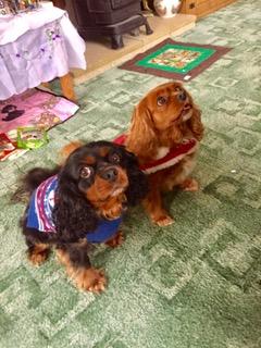 Saffy & Sadie